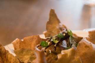 Ants and nasturtium